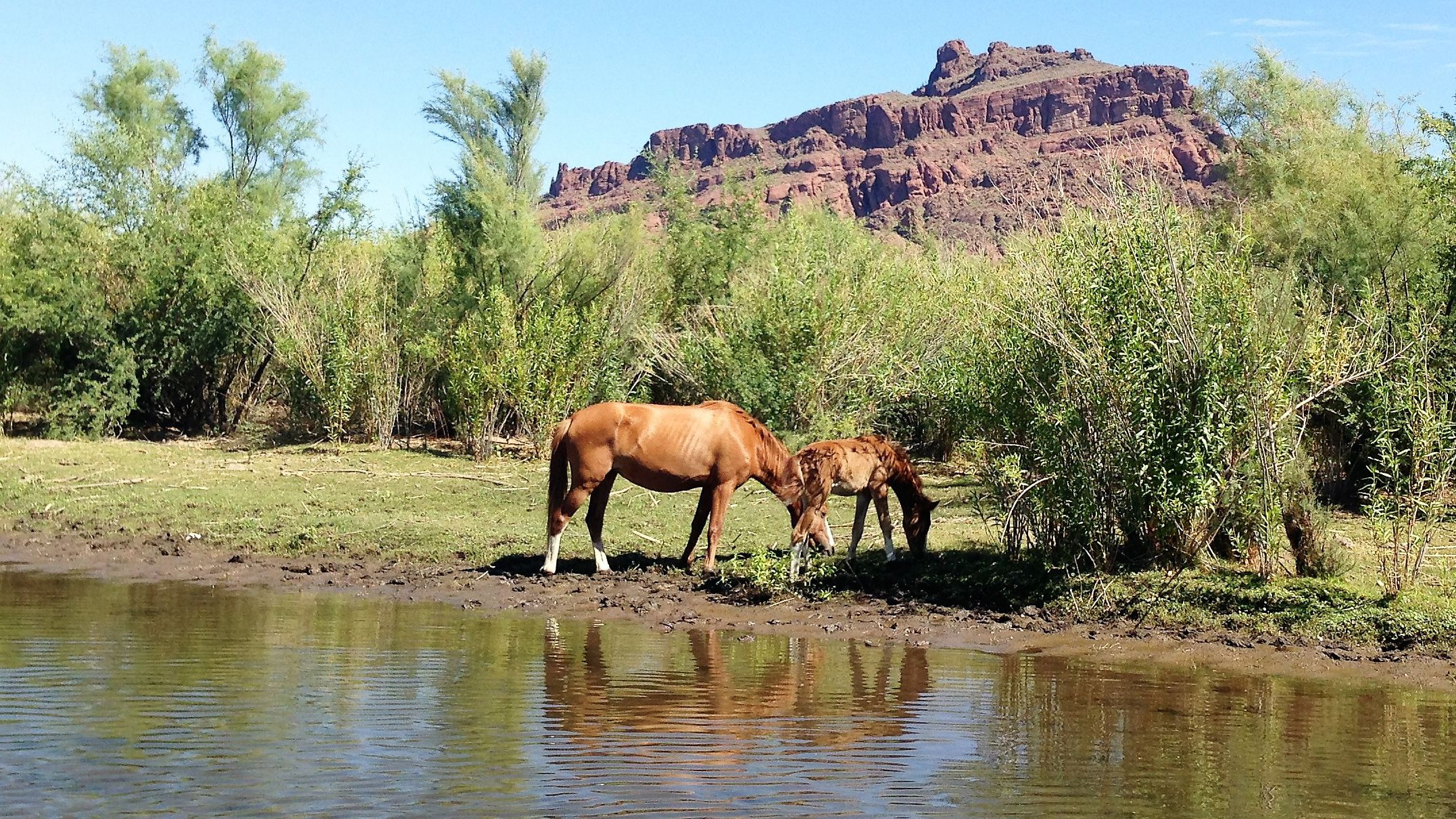 Two wild horses next to a lake in the Southwest of America