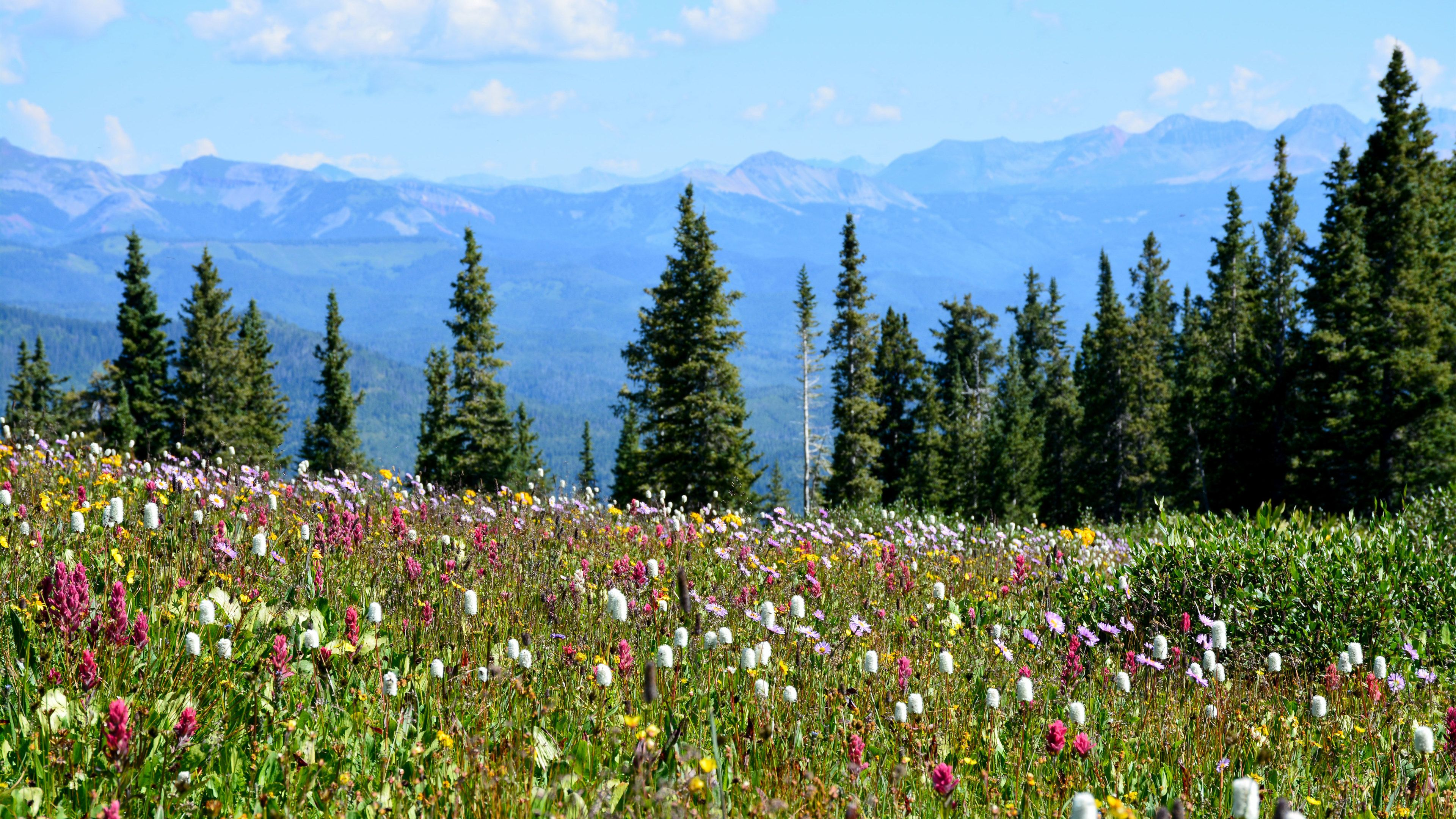Field of wild flowers with trees and mountains in the distance
