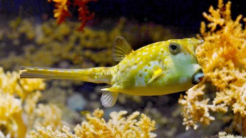 Close up of a yellow fish at the Sea Life Ocean World Bangkok