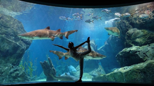 Girl doing a ballet stretch in front of the stunning view of sea life at the Sea Life Ocean World Bangkok