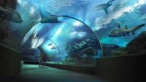 Stunning view of the Sea Life Ocean World Bangkok