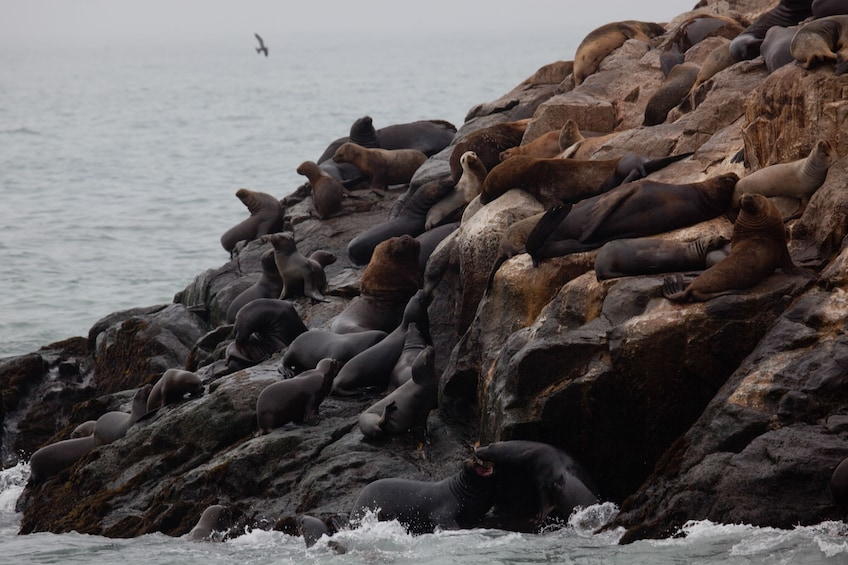 Palomino Islands, Swim With Sea Lions In The Pacific Ocean
