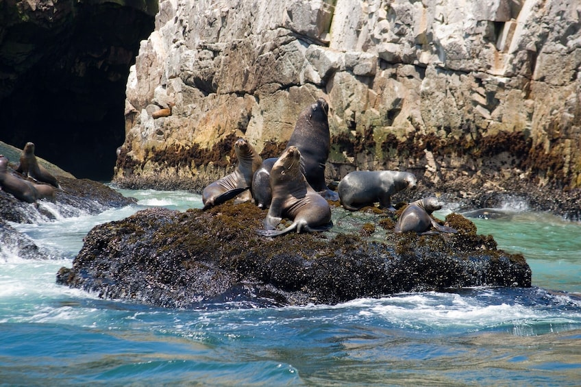 Foto 3 von 8 laden Palomino Islands, Swim With Sea Lions In The Pacific Ocean