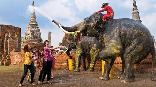 Elephant in Bangkok