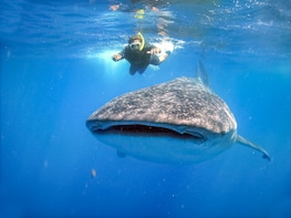 Whale Shark Encounter with Baja-Style Lunch