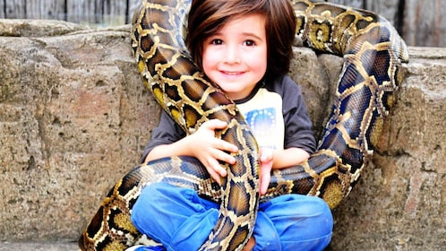 Child and a Burmese Python at the Australian Reptile Park General in New South Wales Regional, Australia