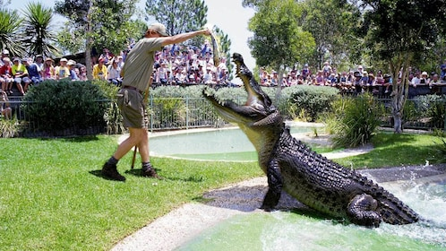 Trainer and crocodile at the Australian Reptile Park General in New South Wales Regional, Australia