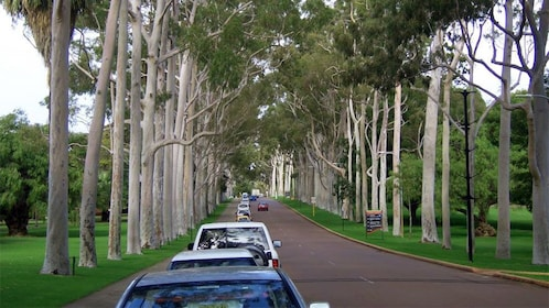 Street lined with trees in Perth