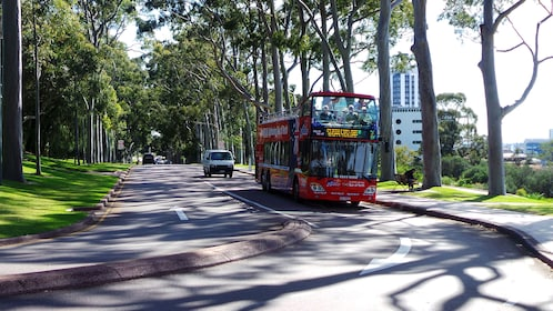 Tour bus on a tree-lined street in Perth