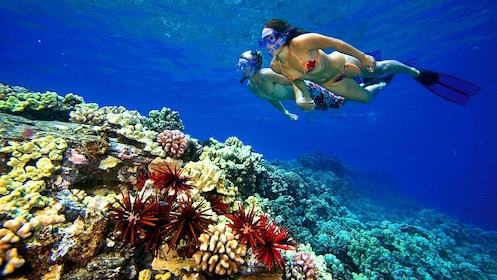 Couple snorkeling in the ocean off Maui