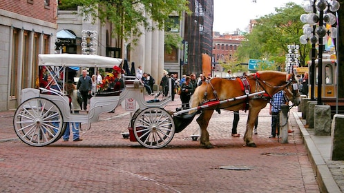 a horse drawn carriage in Boston