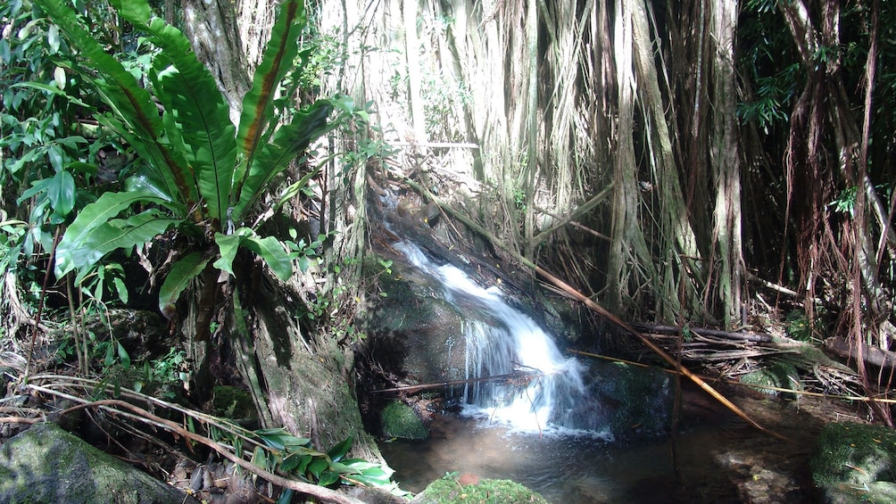 Show item 3 of 10. Hike through the rainforest hills above Waikiki and experience freshwater streams and waterfalls along the route