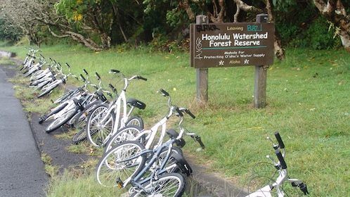Bicycles along the side of the road on Oahu