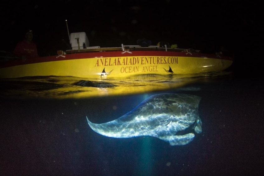 Show item 2 of 9. Manta Ray Night Excursion in Outrigger Canoe