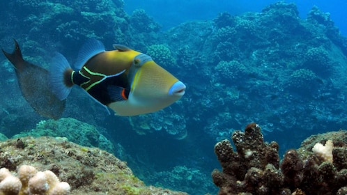 Tropical fish underwater in the Molokini Snorkel express in Maui