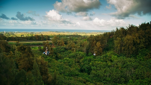 People ziplining over trees in Oahu