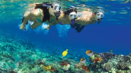 People on a snorkeling adventure in the Pacific Ocean near Maui