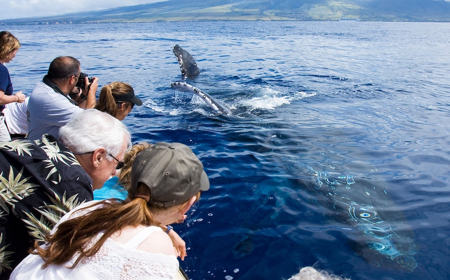 Show item 5 of 9. Maui Whale Watching Tour from Lahaina