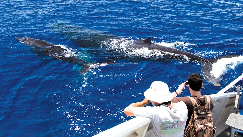 Show item 3 of 9. Guest looking over ship on a whale watching cruise in Maui