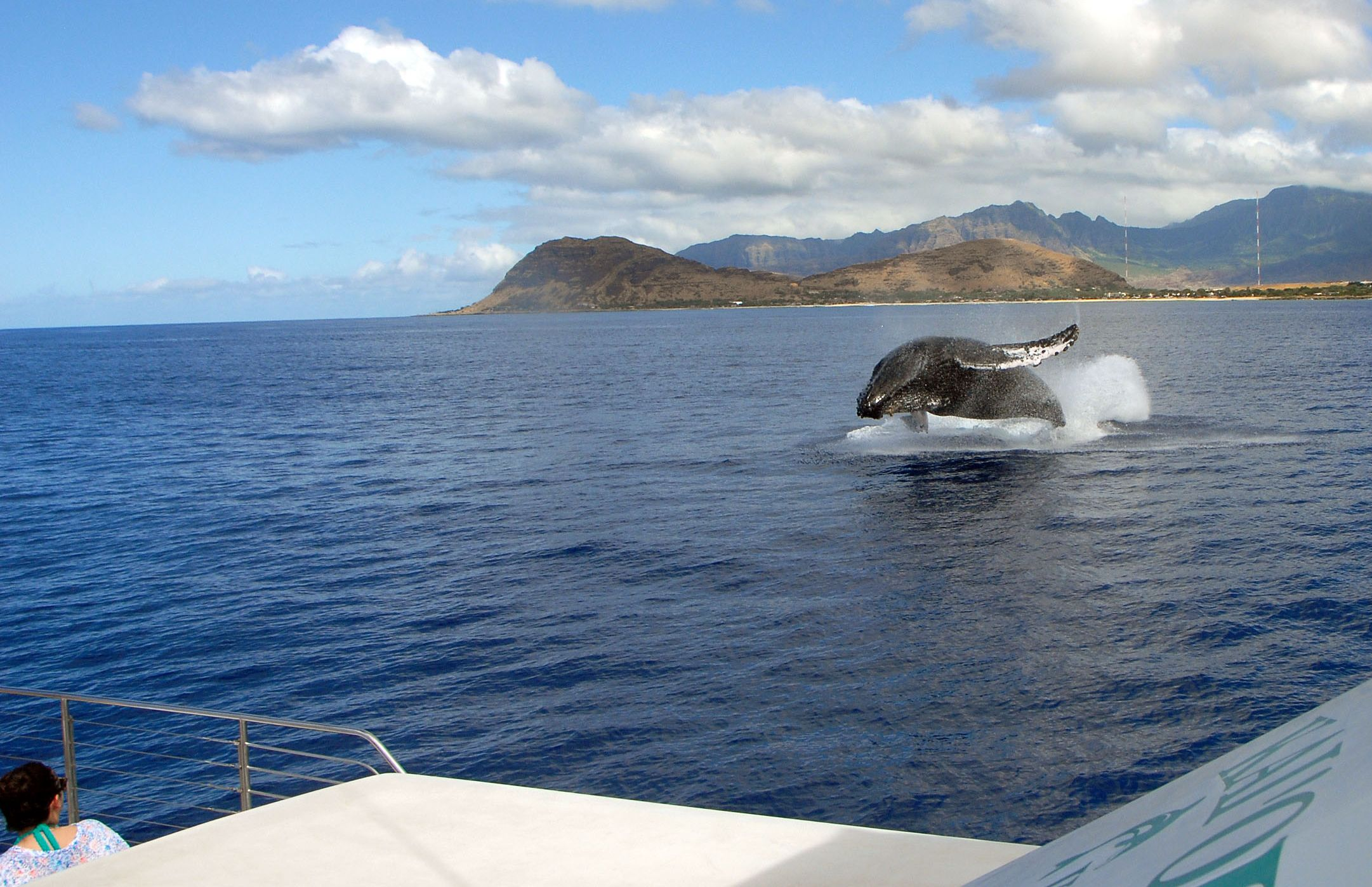 OJC Whale Breach Boat.jpg