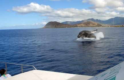 OJC Whale Breach Boat.jpg