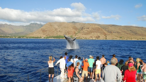 Tourist watching whale jump from water in Oahu