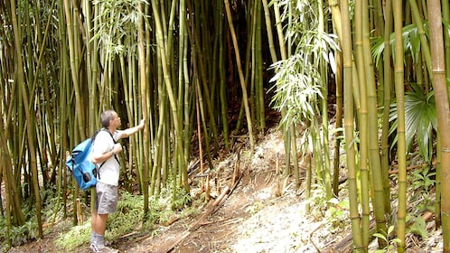Man standing in the bamboo forest near Manoa Falls on Oahu