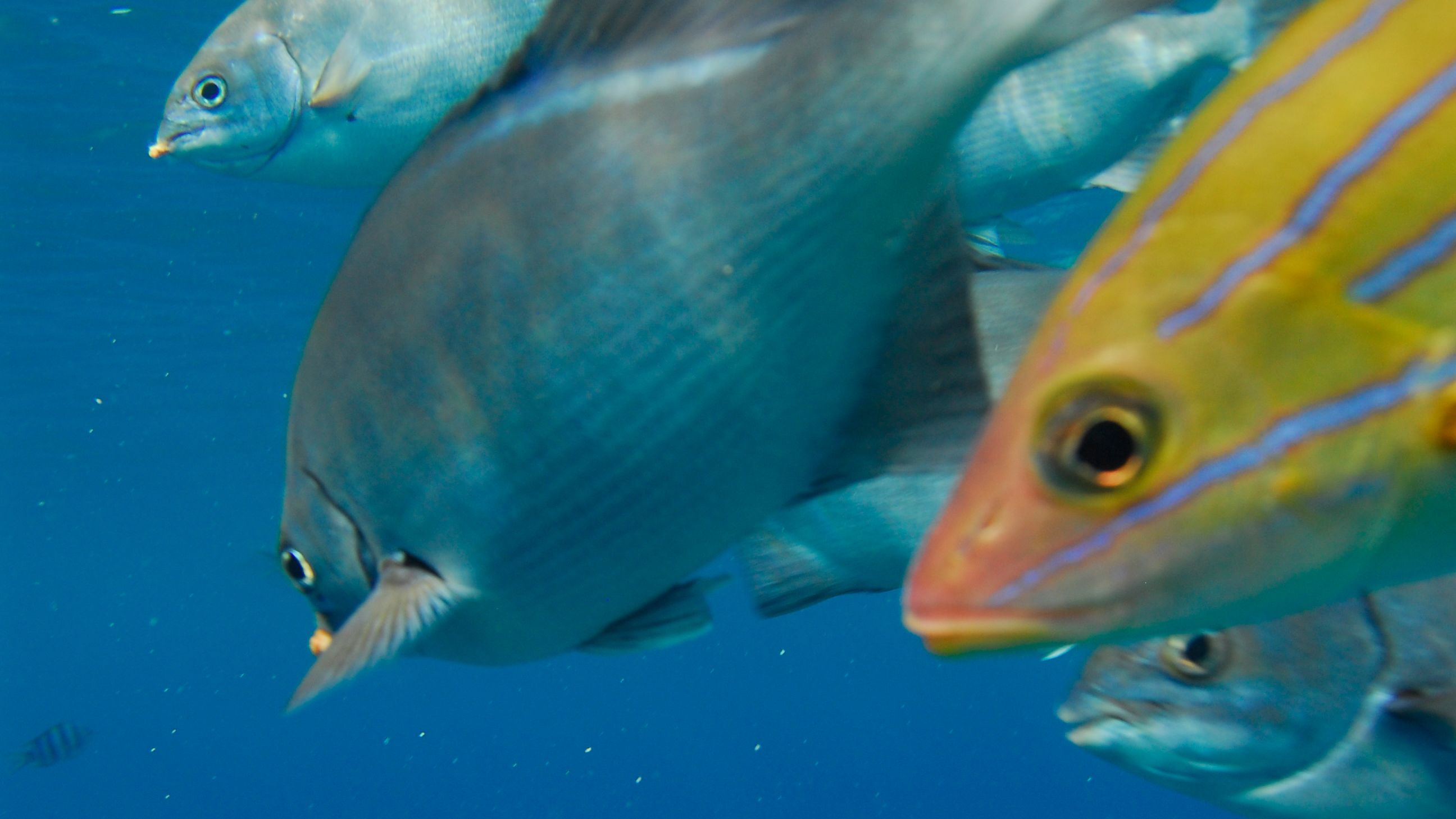 Colorful fish in Kauai