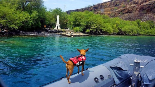Chihuahua in a lifejacket on a raft in Hawaii