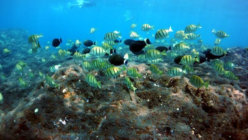 School of fish and coral reef in Hawaii