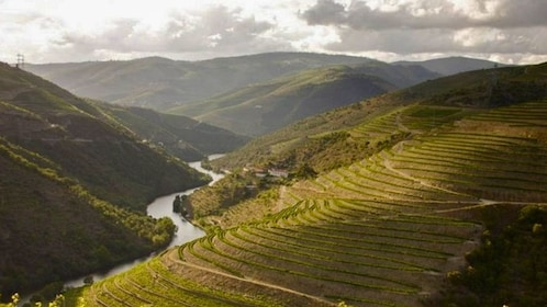 Aerial landscape view of vineyards and river.