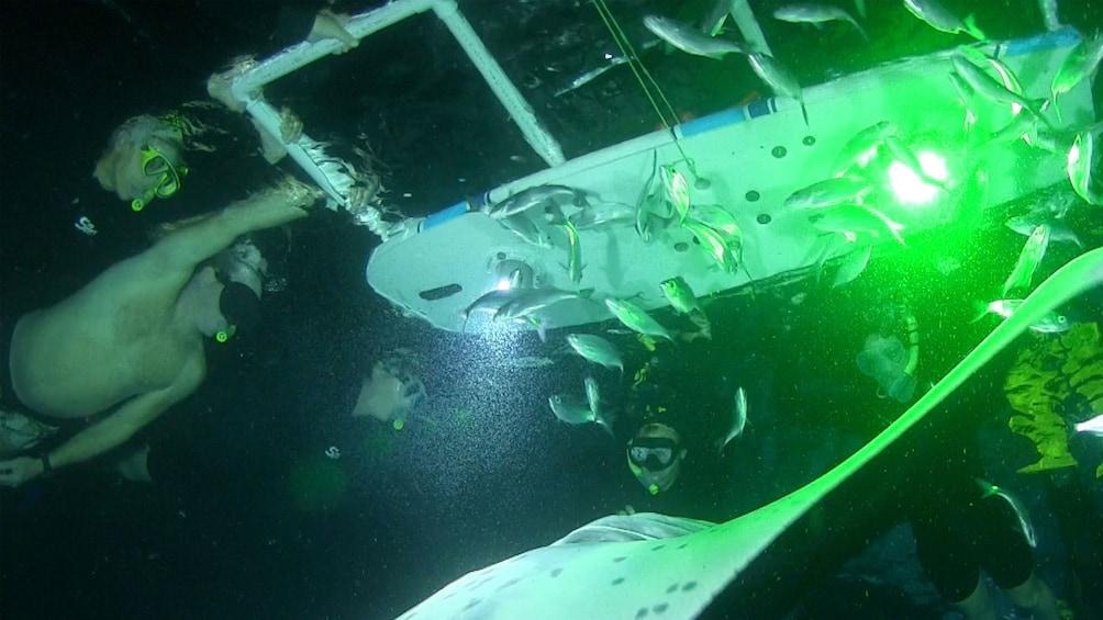 Snorklers swim with Manta rays at night