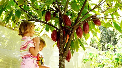 little girl and boy under Cocoa tree in Kauai