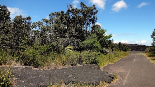 Road ont he way to the Hot Steam Volcano Tour from Hilo