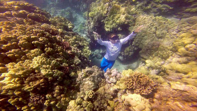 Snorkeler at the Kohala coastline to sanctuary on the Big Island