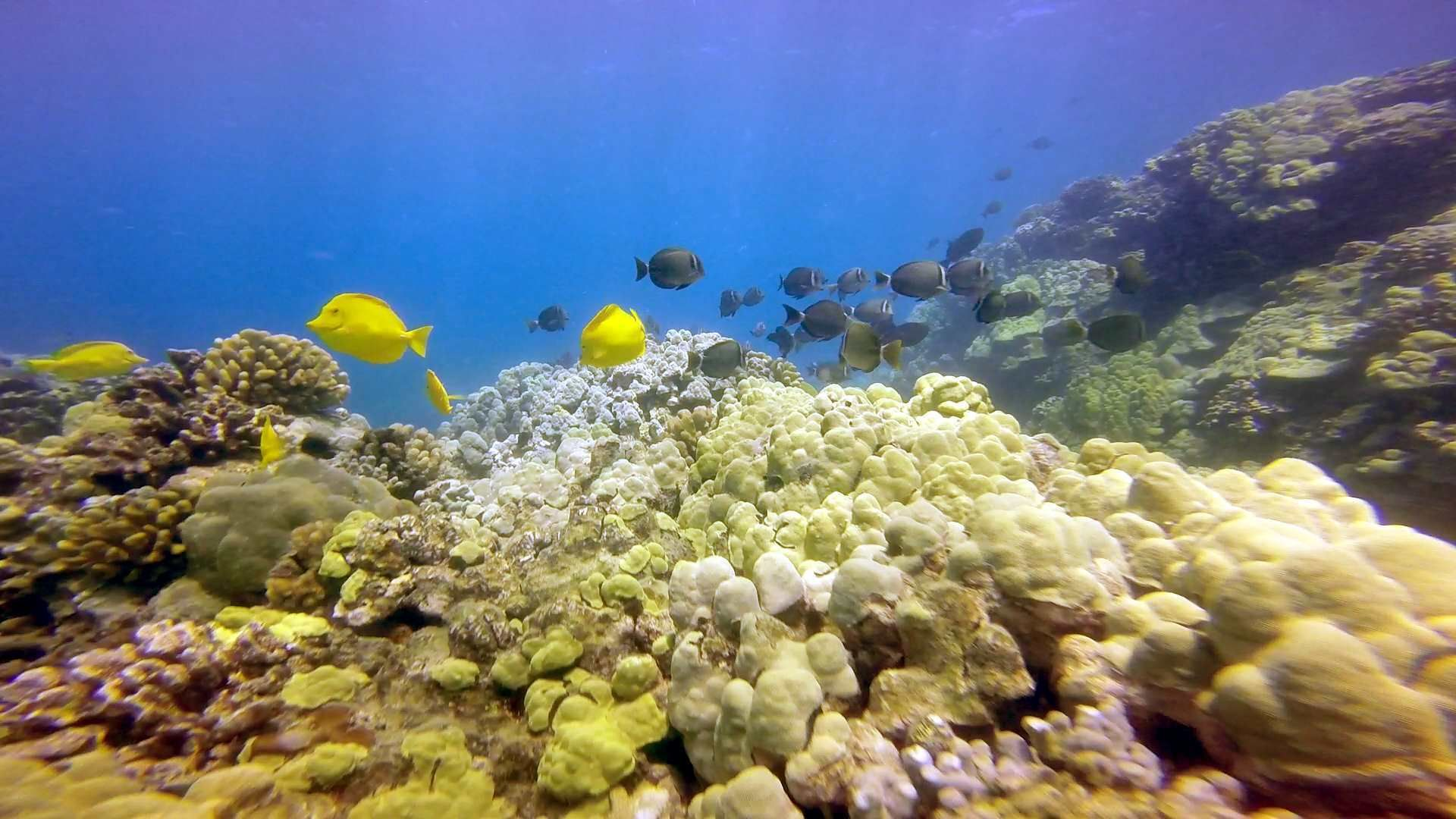 Beautiful fish and coral reef under the water on the Big Island