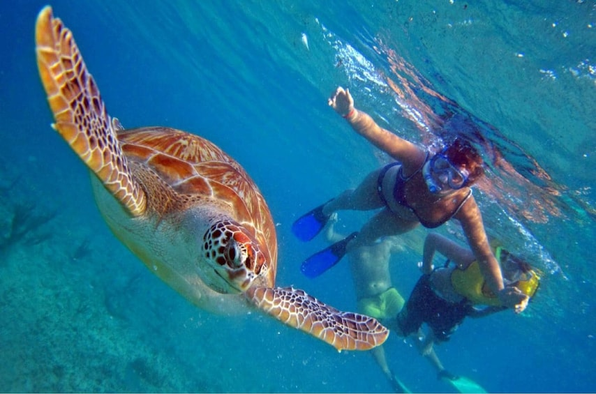 Circle Island Tour including Snorkeling with the Turtles