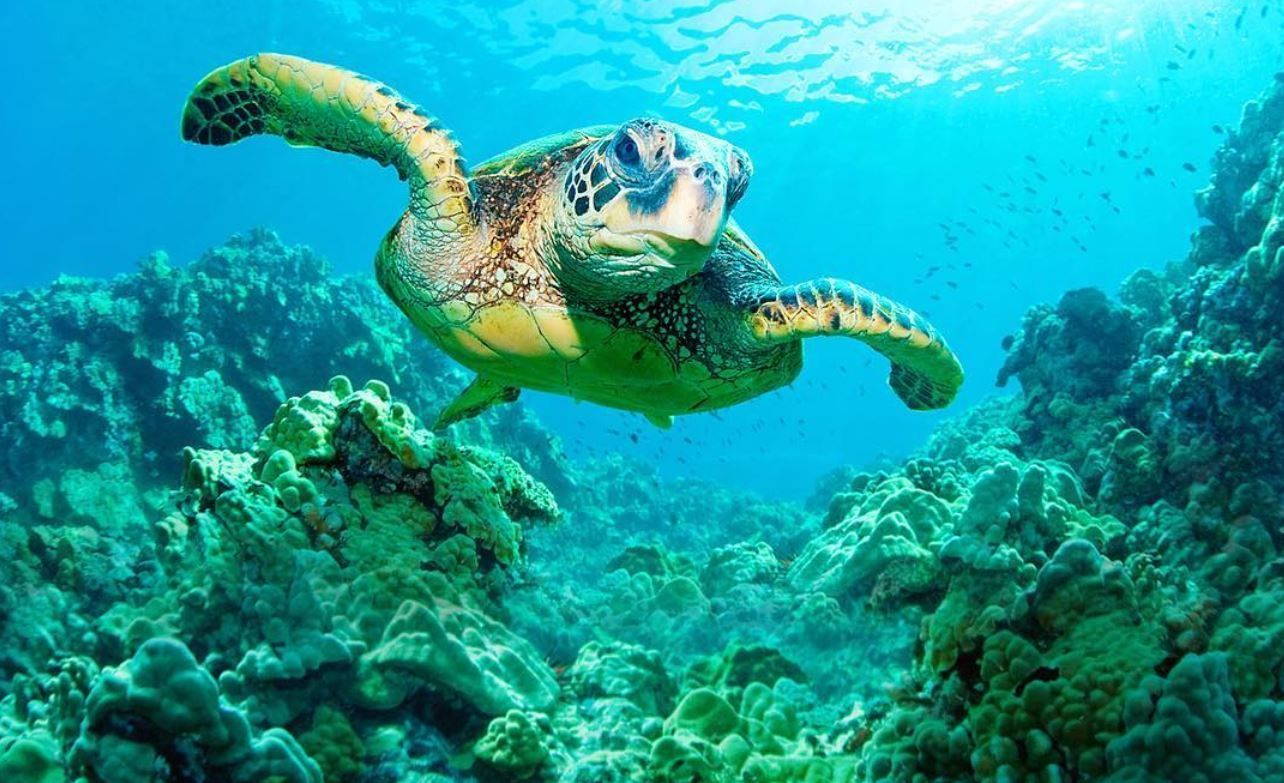Turtle Eco Adventure Tour