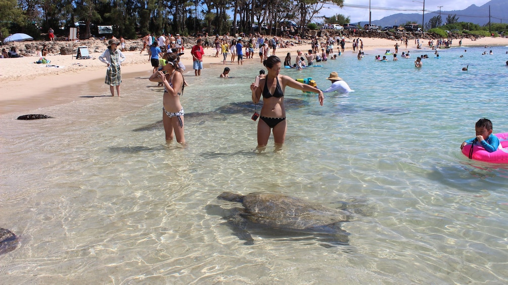 Interact with sea turtles off Oahu's North Shore