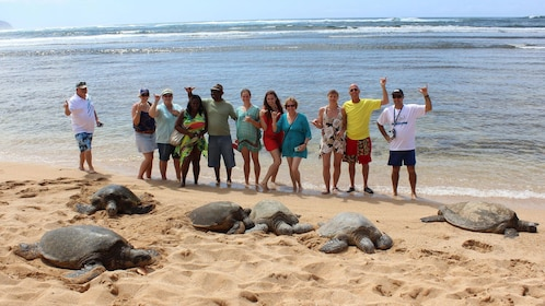 Discover sea turtles along Oahu's beaches