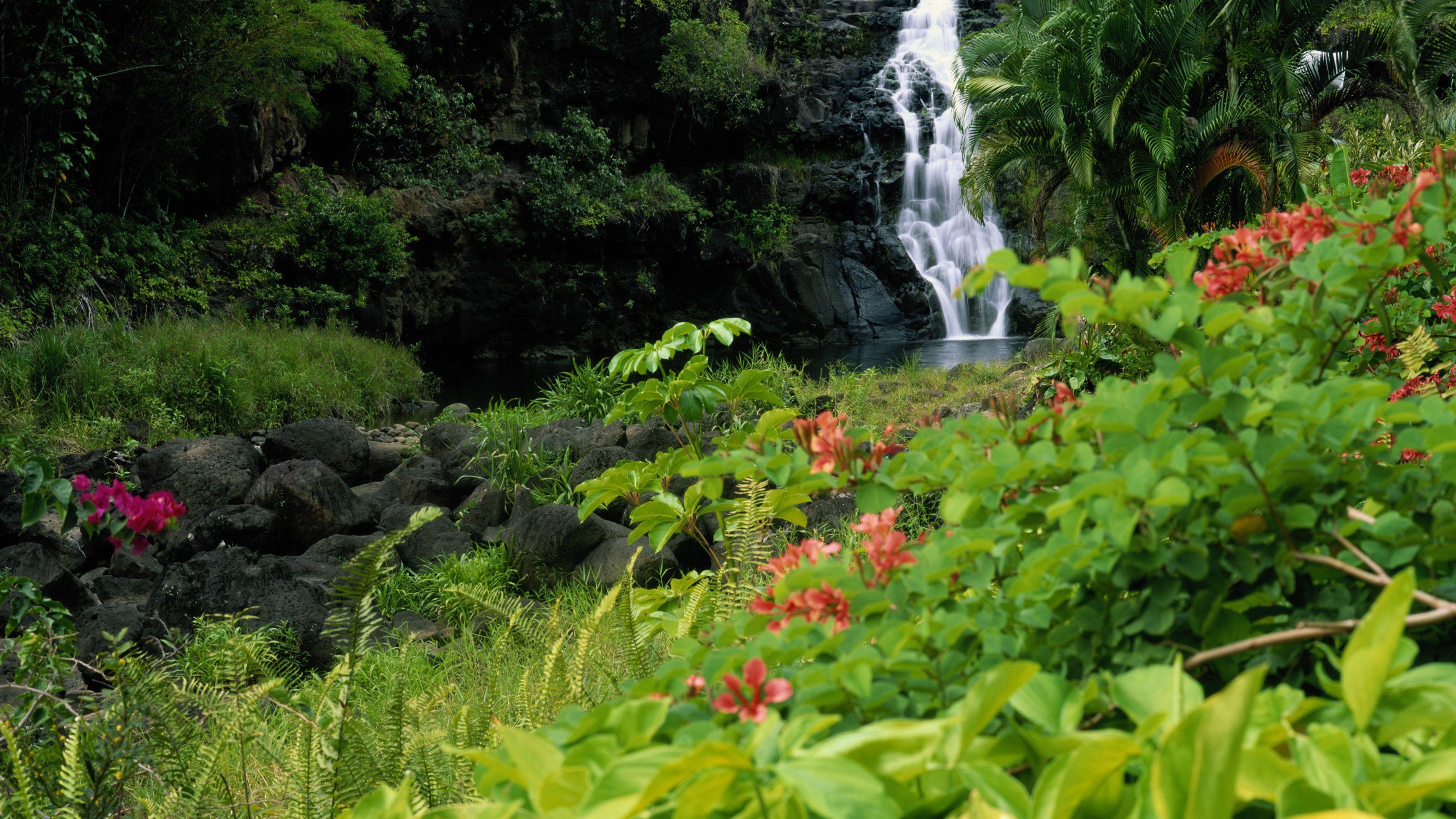 Landscape of plants near a waterfall in Maui Hawaii