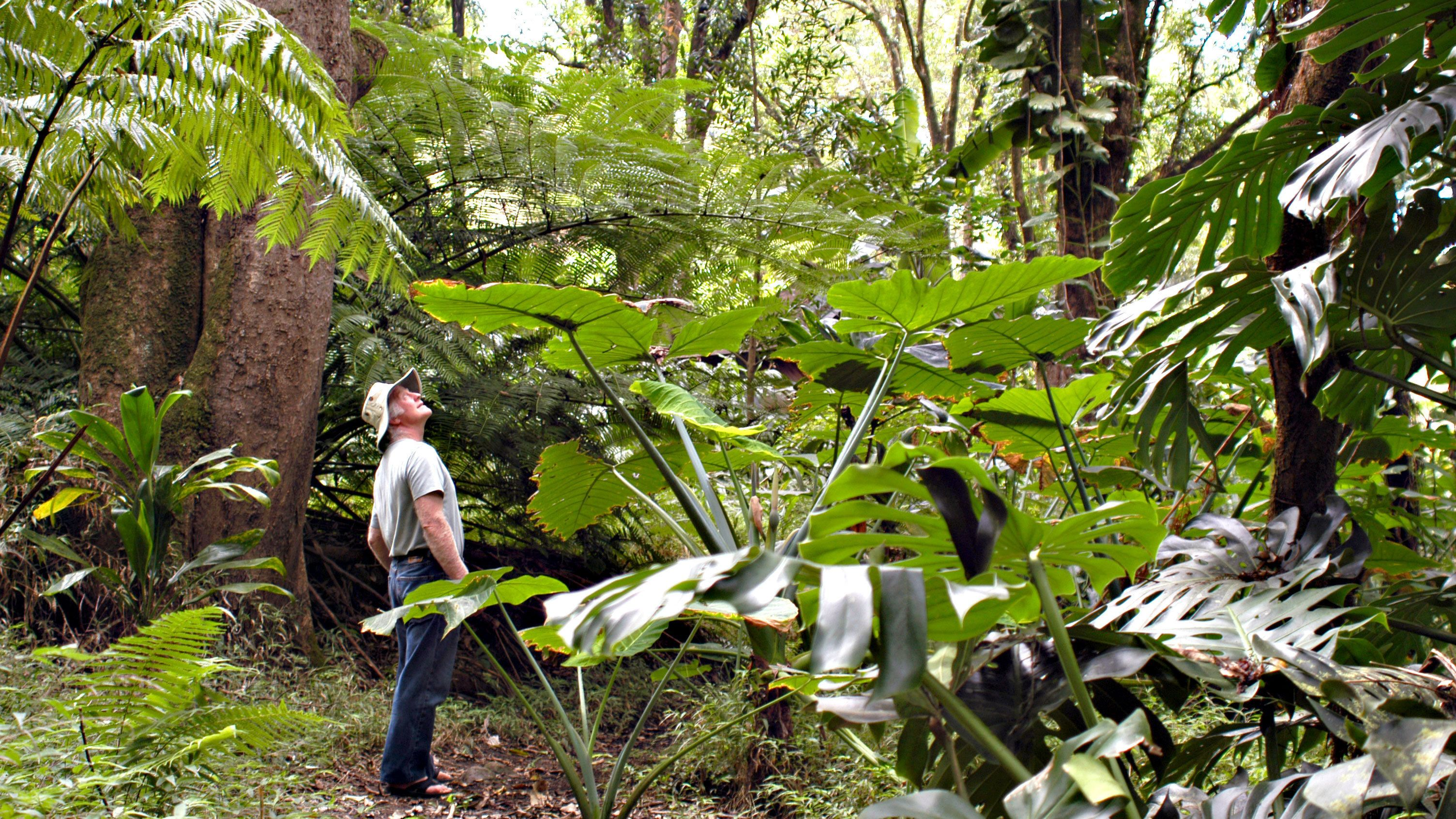 Man looking at the rainforest in Maui