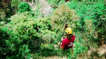 Zipline Canopy Treetop Adventure
