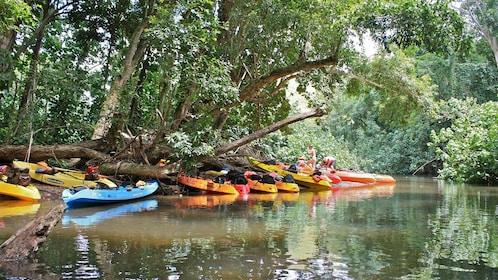 Kayaks on the shore of a Kauai river