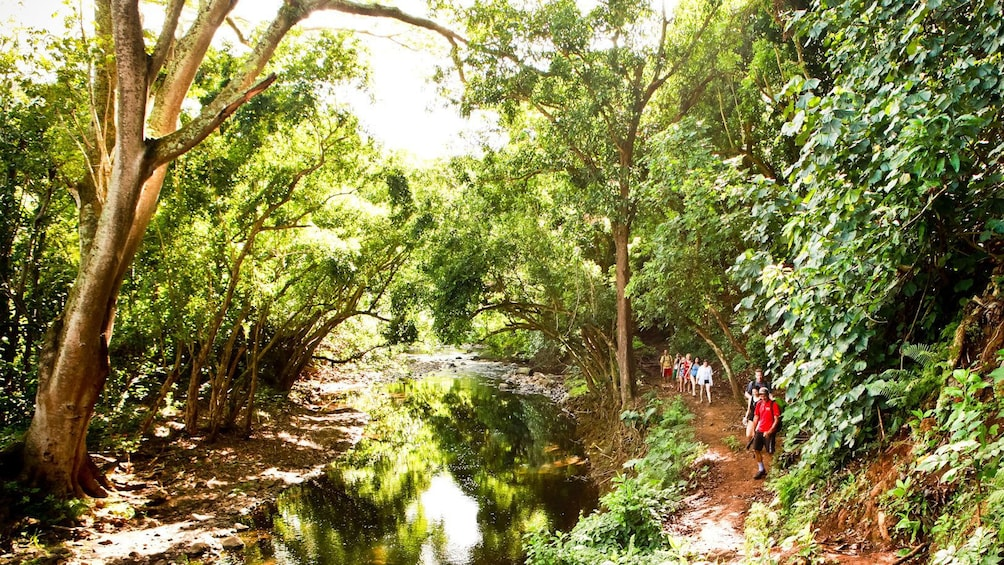 Show item 5 of 4. hikers walking down trail through jungle in Kauai