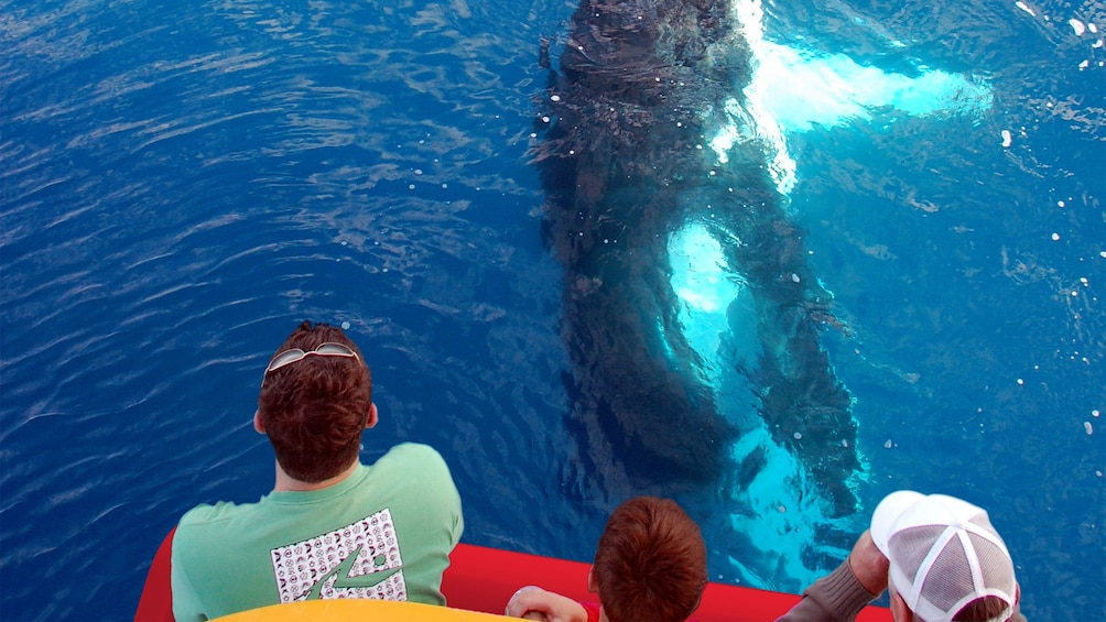 Show item 2 of 5. People watching a whale swimming underneath a boat in the whale watching tour in Maui