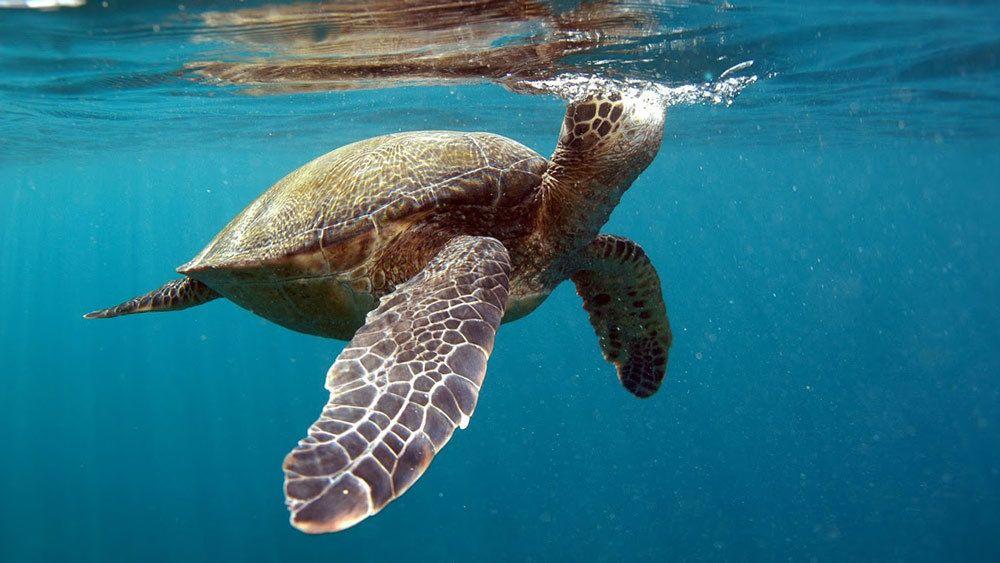 Turtle Reef Kayaking & Snorkeling Tour