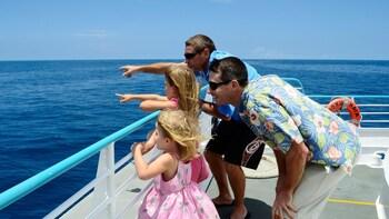 Wild Dolphin Watch Cruise