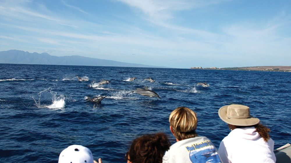 Dolphin pod swim along the coast of Lanai with tourists gazing upon them