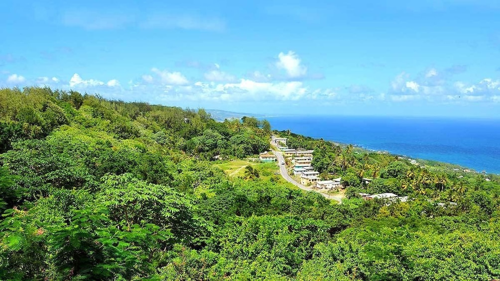 Show item 2 of 6. dense green forest near the beach in Barbados